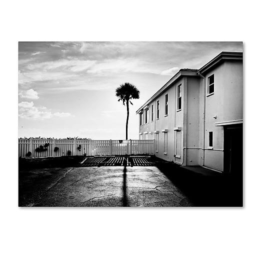 "Trademark Fine Art ''Florida Lone Palm'' by Preston 35"" x 47"" Canvas Art (EM0525-C3547GG)"
