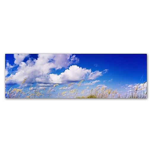 "Trademark Fine Art ''Florida Seagrass'' by Preston 10"" x 32"" Canvas Art (EM0528-C1032GG)"