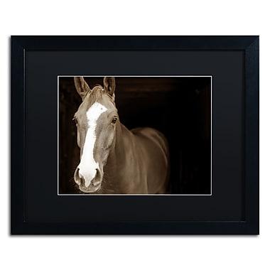 Trademark Fine Art ''Horse Portrait'' by Preston 16