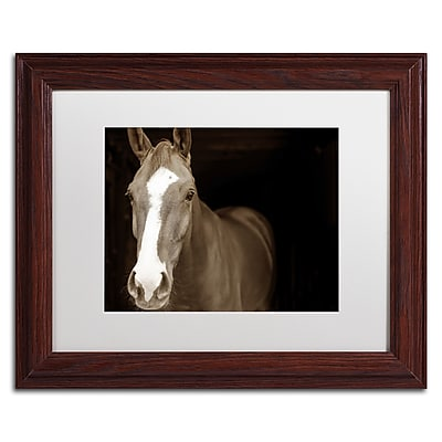 Trademark Fine Art ''Horse Portrait'' by Preston 11