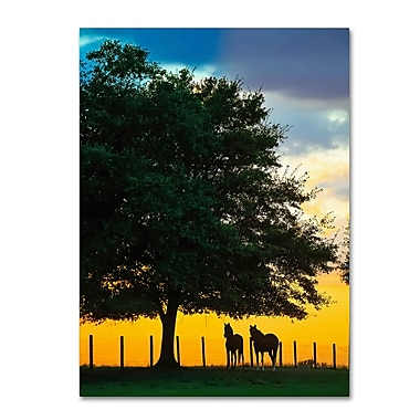Trademark Fine Art ''Horse Sunset'' by Preston 24