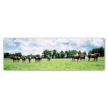 Trademark Fine Art ''Kentucky Horse 5'' by Preston 10
