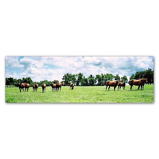 """Trademark Fine Art ''Kentucky Horse 5'' by Preston 6"""" x 19"""" Canvas Art (EM0534-C619GG)"""