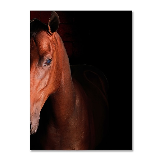 "Trademark Fine Art ''Kentucky horse Intense'' by Preston 14"" x 19"" Canvas Art (EM0535-C1419GG)"