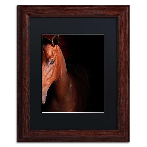 "Trademark Fine Art ''Kentucky horse Intense'' by Preston 11"" x 14"" Black Matted Wood Frame (EM0535-W1114BMF)"