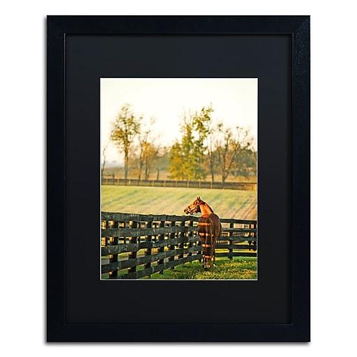 "Trademark Fine Art ''Kentucky Horse Sunrise'' by Preston 16"" x 20"" Black Matted Black Frame (EM0536-B1620BMF)"