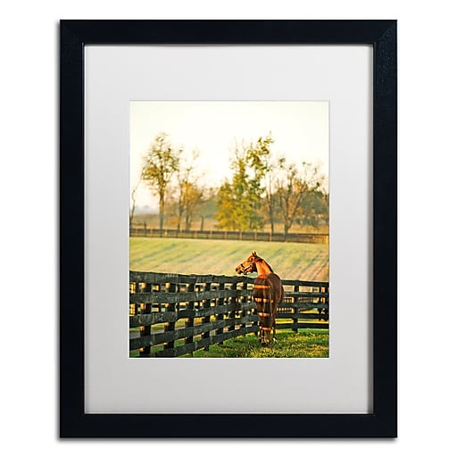 "Trademark Fine Art ''Kentucky Horse Sunrise'' by Preston 16"" x 20"" White Matted Black Frame (EM0536-B1620MF)"