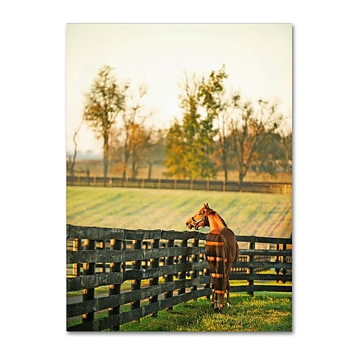 "Trademark Fine Art ''Kentucky Horse Sunrise'' by Preston 35"" x 47"" Canvas Art (EM0536-C3547GG)"