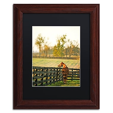 Trademark Fine Art ''Kentucky Horse Sunrise'' by Preston 11