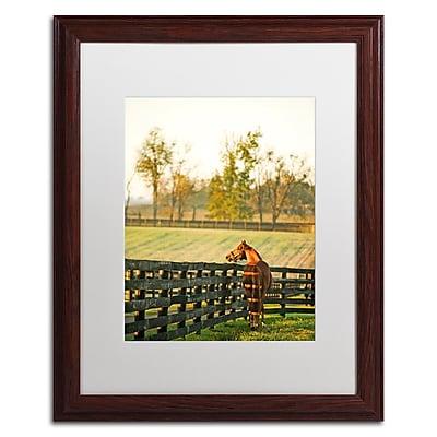 Trademark Fine Art ''Kentucky Horse Sunrise'' by Preston 16
