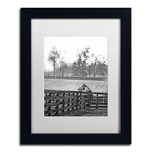 "Trademark Fine Art ''Kentucky Horse Sunrise BW'' by Preston 11"" x 14"" White Matted Black Frame (EM0537-B1114MF)"