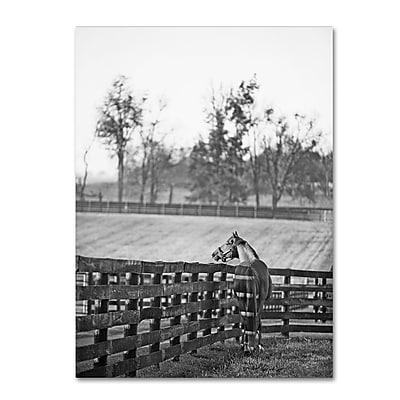 Trademark Fine Art ''Kentucky Horse Sunrise BW'' by Preston 18