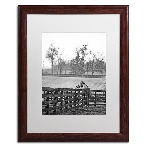"Trademark Fine Art ''Kentucky Horse Sunrise BW'' by Preston 16"" x 20"" White Matted Wood Frame (EM0537-W1620MF)"