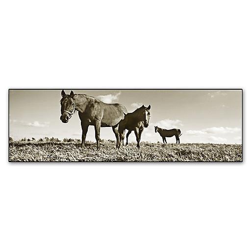 "Trademark Fine Art ''Kentucky Horses'' by Preston 6"" x 19"" Canvas Art (EM0539-C619GG)"