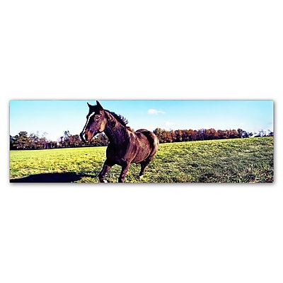 Trademark Fine Art ''Running Horse'' by Preston 8