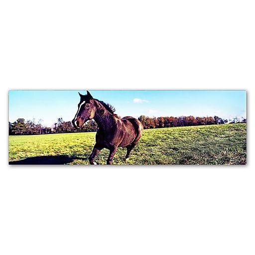 "Trademark Fine Art ''Running Horse'' by Preston 8"" x 24"" Canvas Art (EM0564-C824GG)"