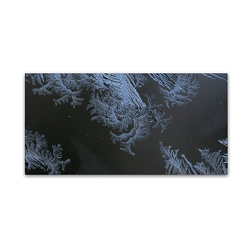 "Trademark Fine Art ''Frost Lace'' by Kurt Shaffer 16"" x 32"" Canvas Art (KS01070-C1632GG)"