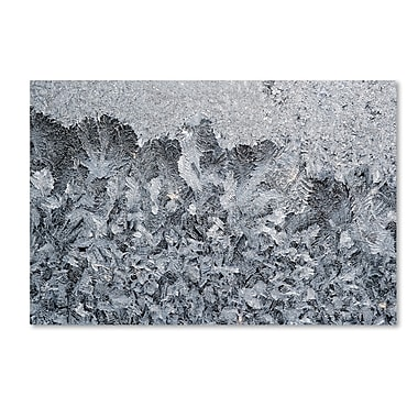 Trademark Fine Art ''Frost Mosaic 2'' by Kurt Shaffer 12