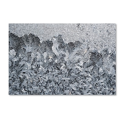 Trademark Fine Art ''Frost Mosaic 2'' by Kurt Shaffer 30