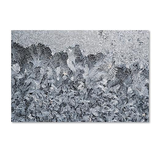 """Trademark Fine Art ''Frost Mosaic 2'' by Kurt Shaffer 30"""" x 47"""" Canvas Art (KS01071-C3047GG)"""
