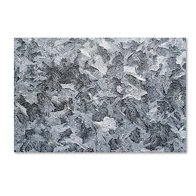 Trademark Fine Art ''Frost Mosaic'' by Kurt Shaffer 22