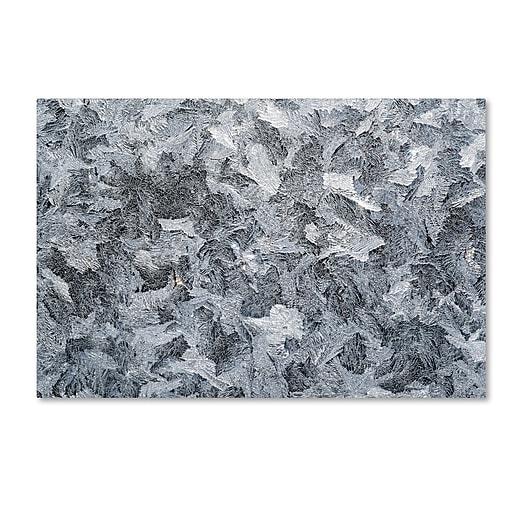 """Trademark Fine Art ''Frost Mosaic'' by Kurt Shaffer 16"""" x 24"""" Canvas Art (KS01072-C1624GG)"""