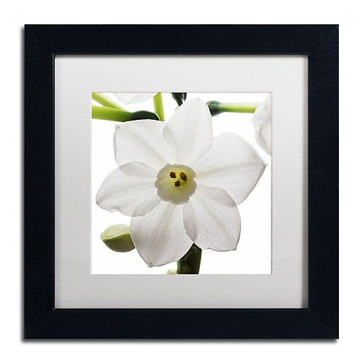 "Trademark Fine Art ''Paper White 2'' by Kurt Shaffer 11"" x 11"" White Matted Black Frame (KS01075-B1111MF)"