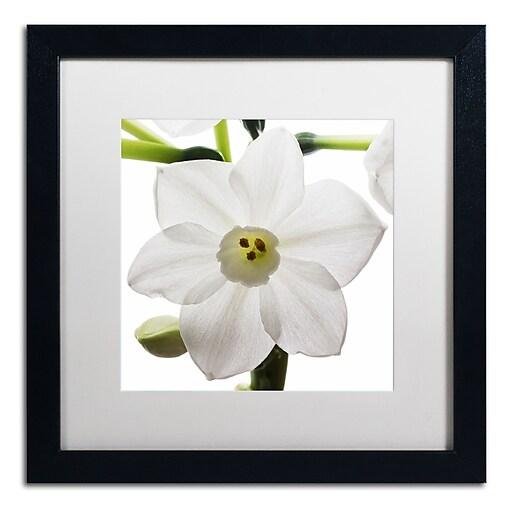 "Trademark Fine Art ''Paper White 2'' by Kurt Shaffer 16"" x 16"" White Matted Black Frame (KS01075-B1616MF)"