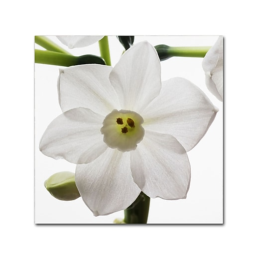 "Trademark Fine Art ''Paper White 2'' by Kurt Shaffer 24"" x 24"" Canvas Art (KS01075-C2424GG)"