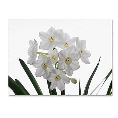 Trademark Fine Art ''Paper White Bouquet'' by Kurt Shaffer 18