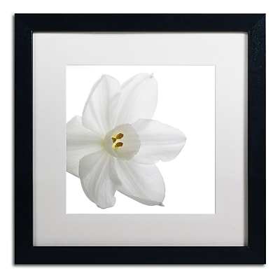Trademark Fine Art ''Paper White'' by Kurt Shaffer 16