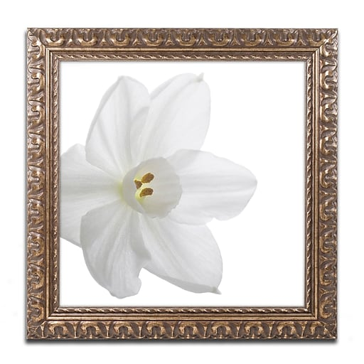 "Trademark Fine Art ''Paper White'' by Kurt Shaffer 11"" x 14"" Ornate Frame (KS01077-G1114F)"