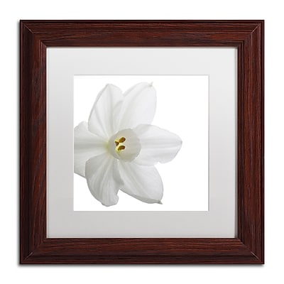 Trademark Fine Art ''Paper White'' by Kurt Shaffer 11