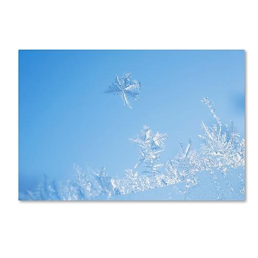 "Trademark Fine Art ''Window Frost'' by Kurt Shaffer 30"" x 47"" Canvas Art (KS01078-C3047GG)"