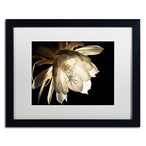 "Trademark Fine Art ''Midnight Portrait'' by Kurt Shaffer 16"" x 20"" White Matted Black Frame (KS01085-B1620MF)"