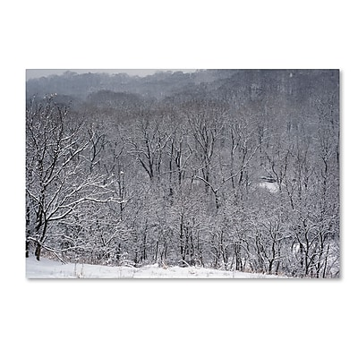 Trademark Fine Art ''Quiet Heavy Snowfall'' by Kurt Shaffer 22