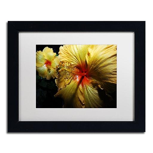 "Trademark Fine Art ''Sunburst Hibiscus'' by Kurt Shaffer 11"" x 14"" White Matted Black Frame (KS01088-B1114MF)"
