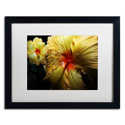 "Trademark Fine Art ''Sunburst Hibiscus'' by Kurt Shaffer 16"" x 20"" White Matted Black Frame (KS01088-B1620MF)"