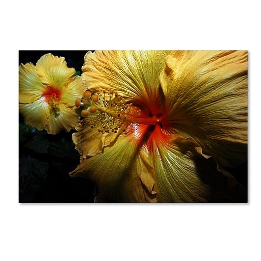 "Trademark Fine Art ''Sunburst Hibiscus'' by Kurt Shaffer 16"" x 24"" Canvas Art (KS01088-C1624GG)"