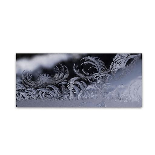 """Trademark Fine Art ''Fabulous Frost'' by Kurt Shaffer 20"""" x 47"""" Canvas Art (KS01092-C2047GG)"""