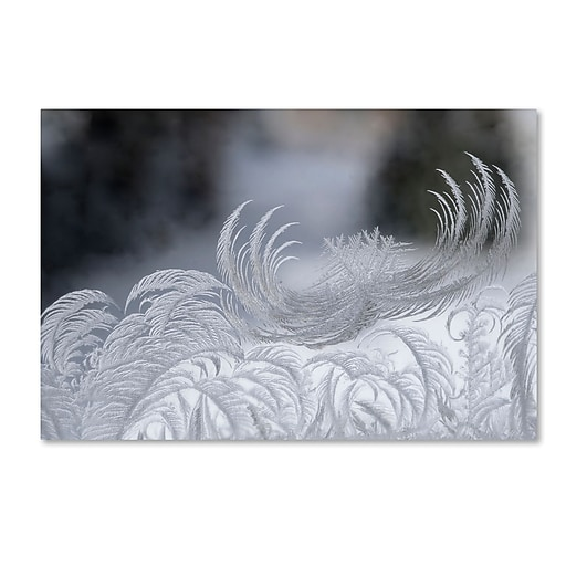 "Trademark Fine Art ''February Window Frost'' by Kurt Shaffer 12"" x 19"" Canvas Art (KS01093-C1219GG)"