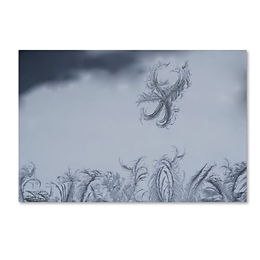 Trademark Fine Art ''Frost Fairy on a Window'' by Kurt Shaffer 16