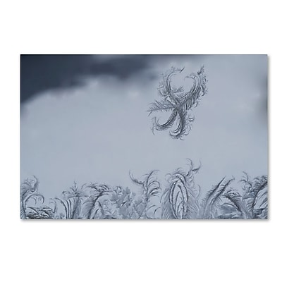 Trademark Fine Art ''Frost Fairy on a Window'' by Kurt Shaffer 22