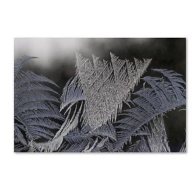 Trademark Fine Art ''Frost on my Window'' by Kurt Shaffer 22