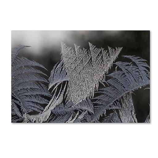 "Trademark Fine Art ''Frost on my Window'' by Kurt Shaffer 12"" x 19"" Canvas Art (KS01096-C1219GG)"