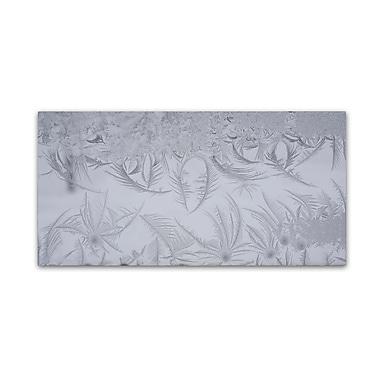 Trademark Fine Art ''Graceful Frost Pattern'' by Kurt Shaffer 24