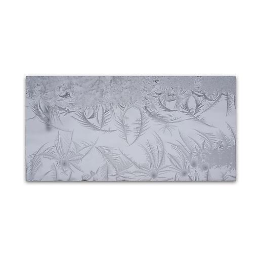 "Trademark Fine Art ''Graceful Frost Pattern'' by Kurt Shaffer 10"" x 19"" Canvas Art (KS01097-C1019GG)"
