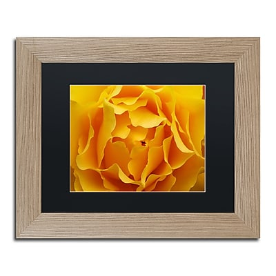 Trademark Fine Art ''Hypnotic Yellow Rose'' by Kurt Shaffer 11