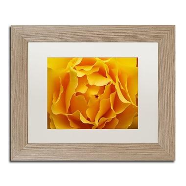 Trademark Fine Art ''Hypnotic Yellow Rose'' by Kurt Shaffer 11