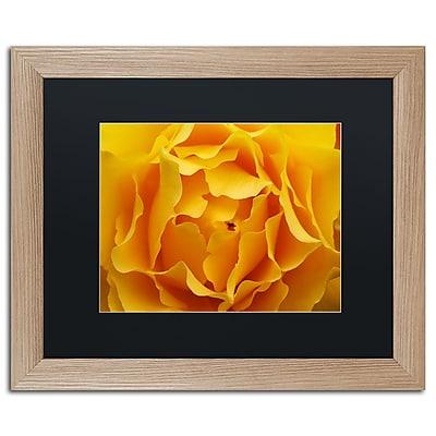 Trademark Fine Art ''Hypnotic Yellow Rose'' by Kurt Shaffer 16